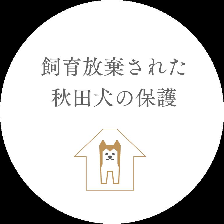 飼育放棄された秋田犬の保護