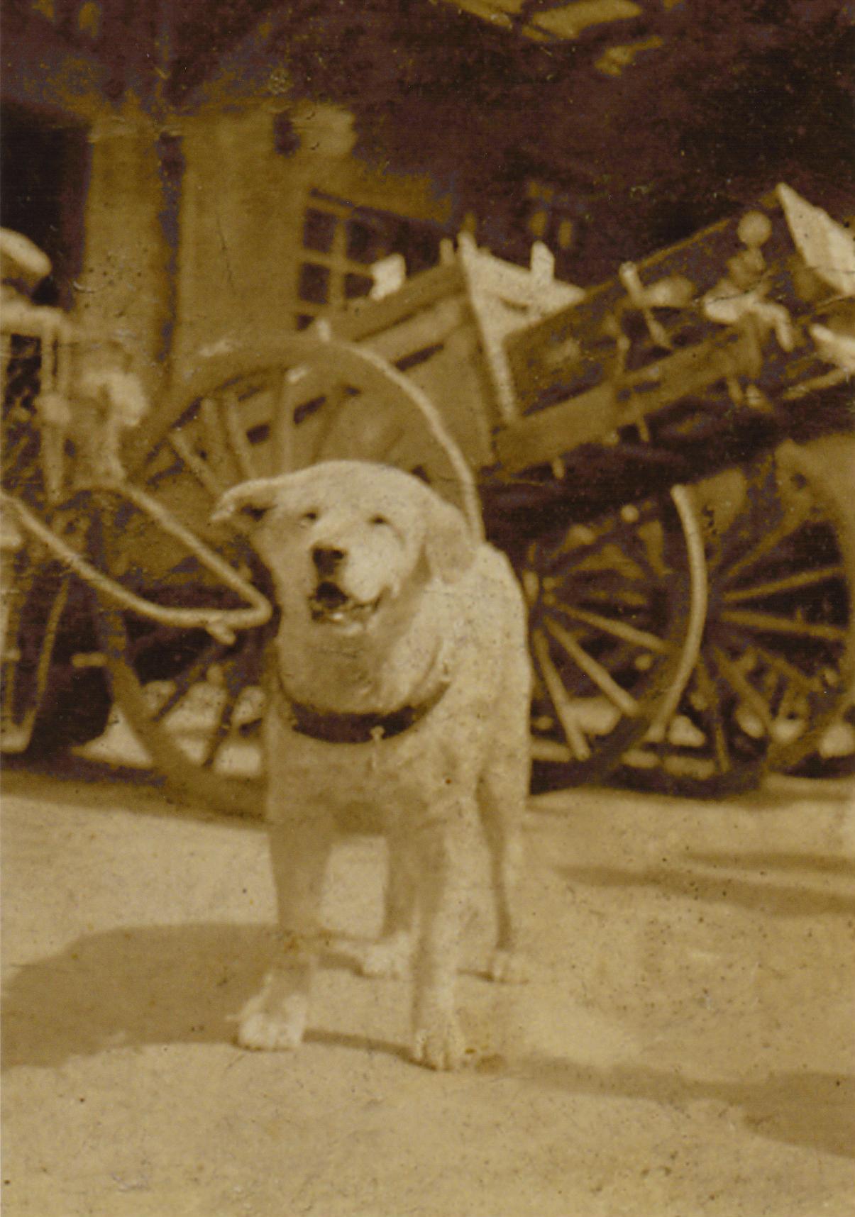 忠犬ハチ公のはなしハチ(1923-1935)