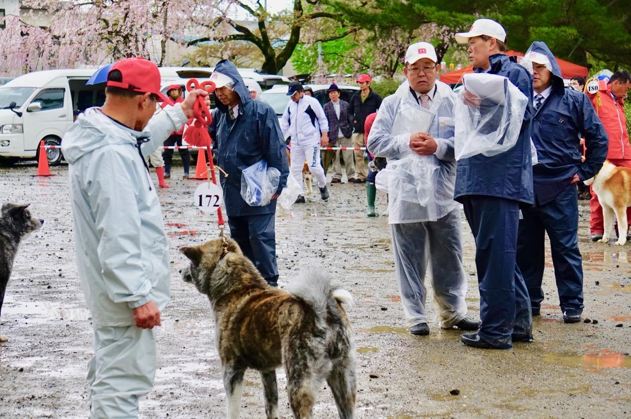 編集長取材日記◆秋田犬保存会の本部展潜入