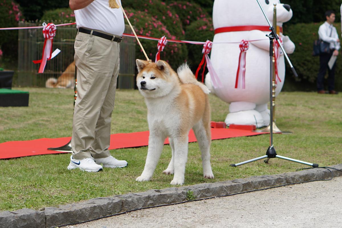 編集部取材日記◆秋田犬ふれあい処 in 千秋公園 オープニングイベント
