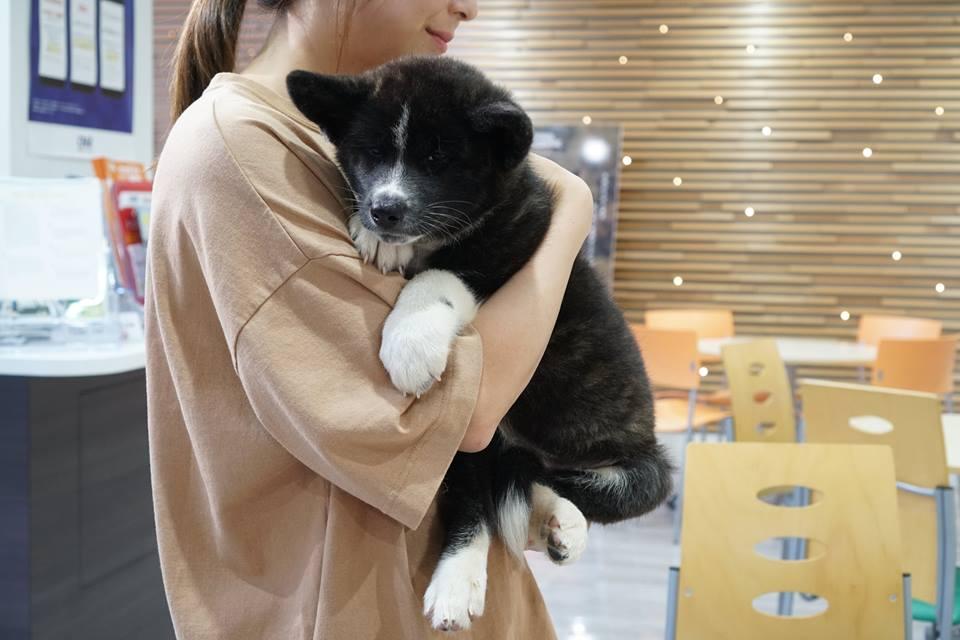 編集部取材日記◆秋田犬の仔犬、里親さんのもとへ
