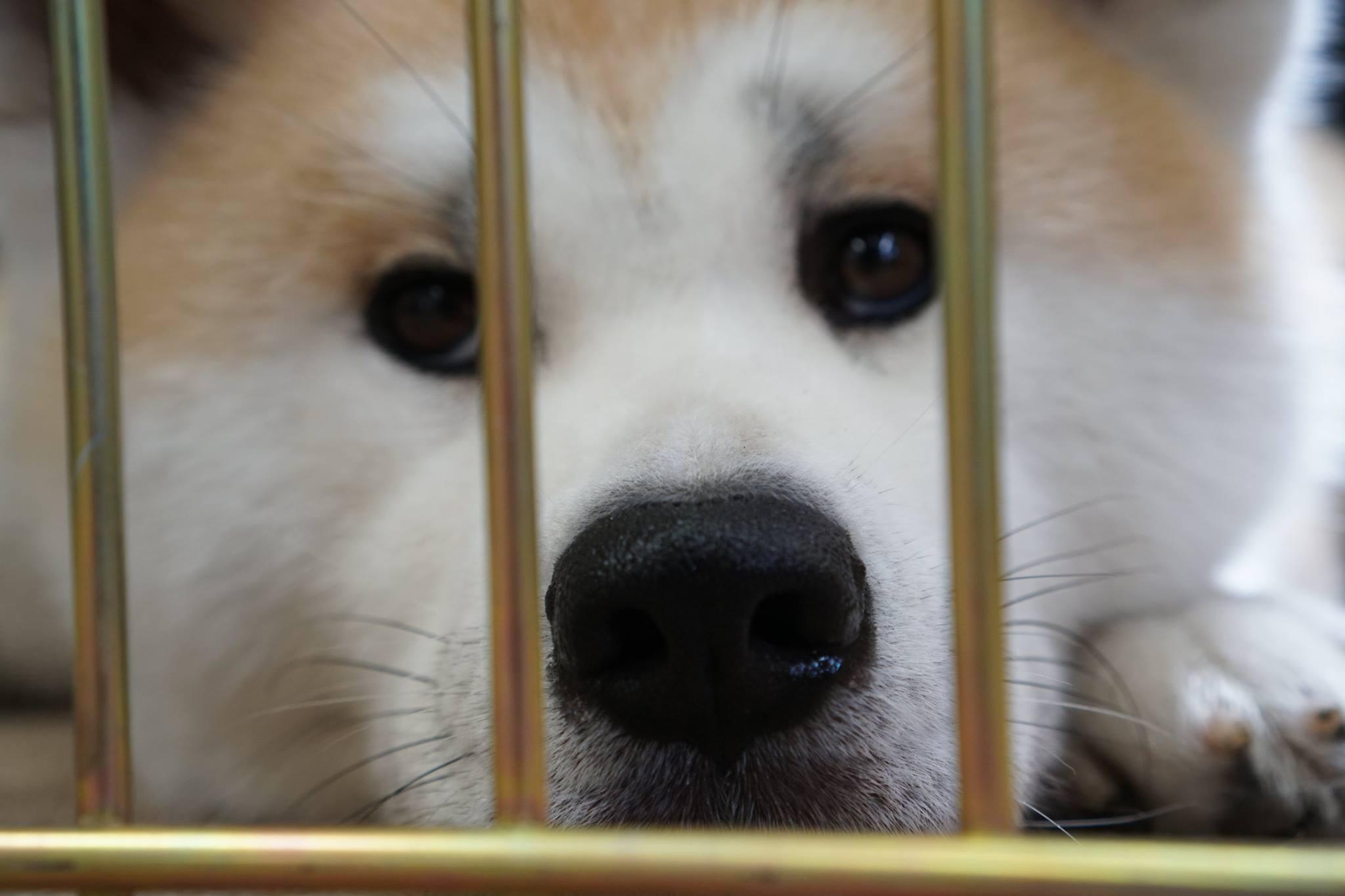 秋田犬に会いに行く◆秋田犬ふれあい処