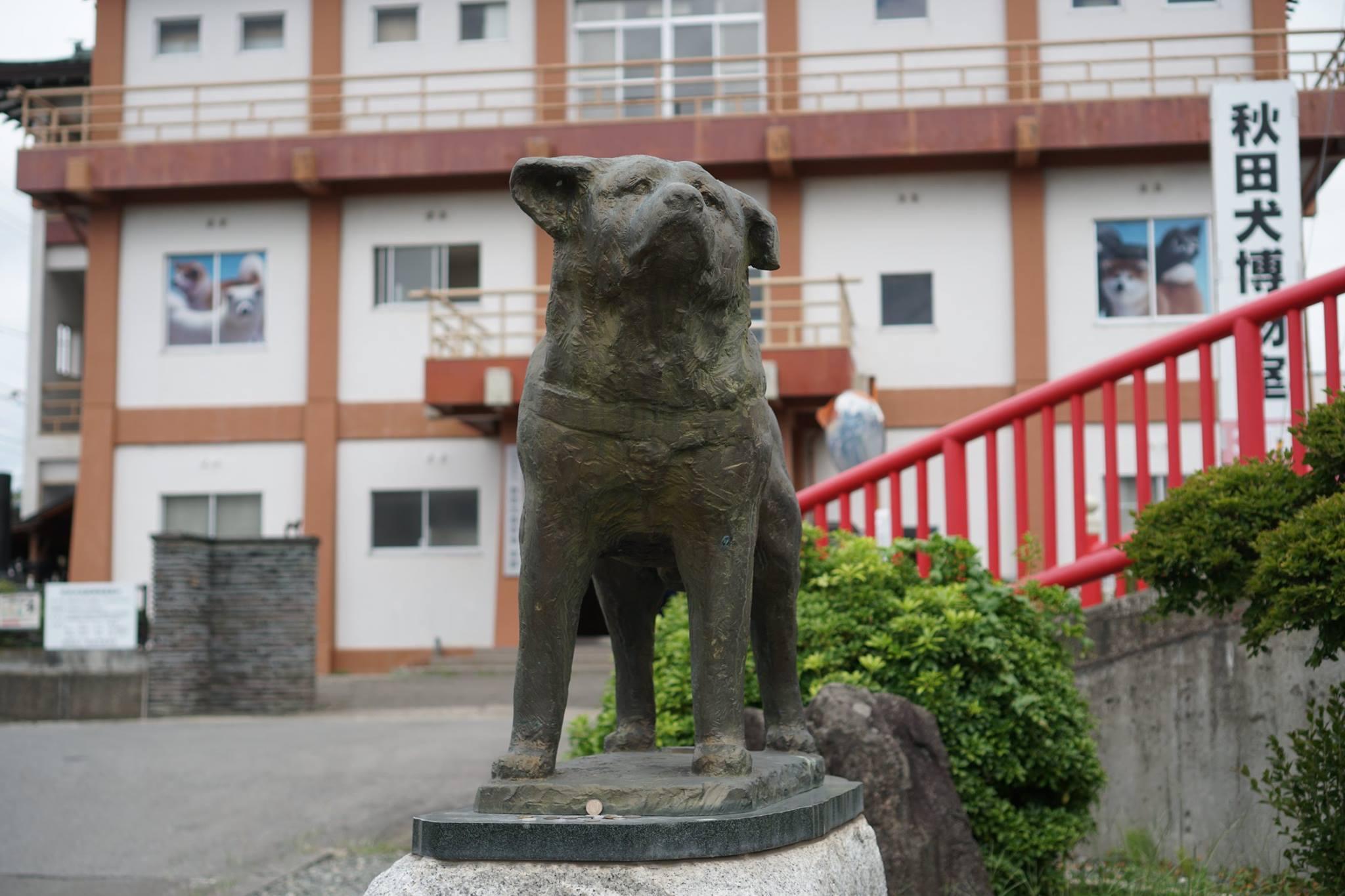 秋田犬に会いに行く◆秋田犬保存会/秋田犬会館