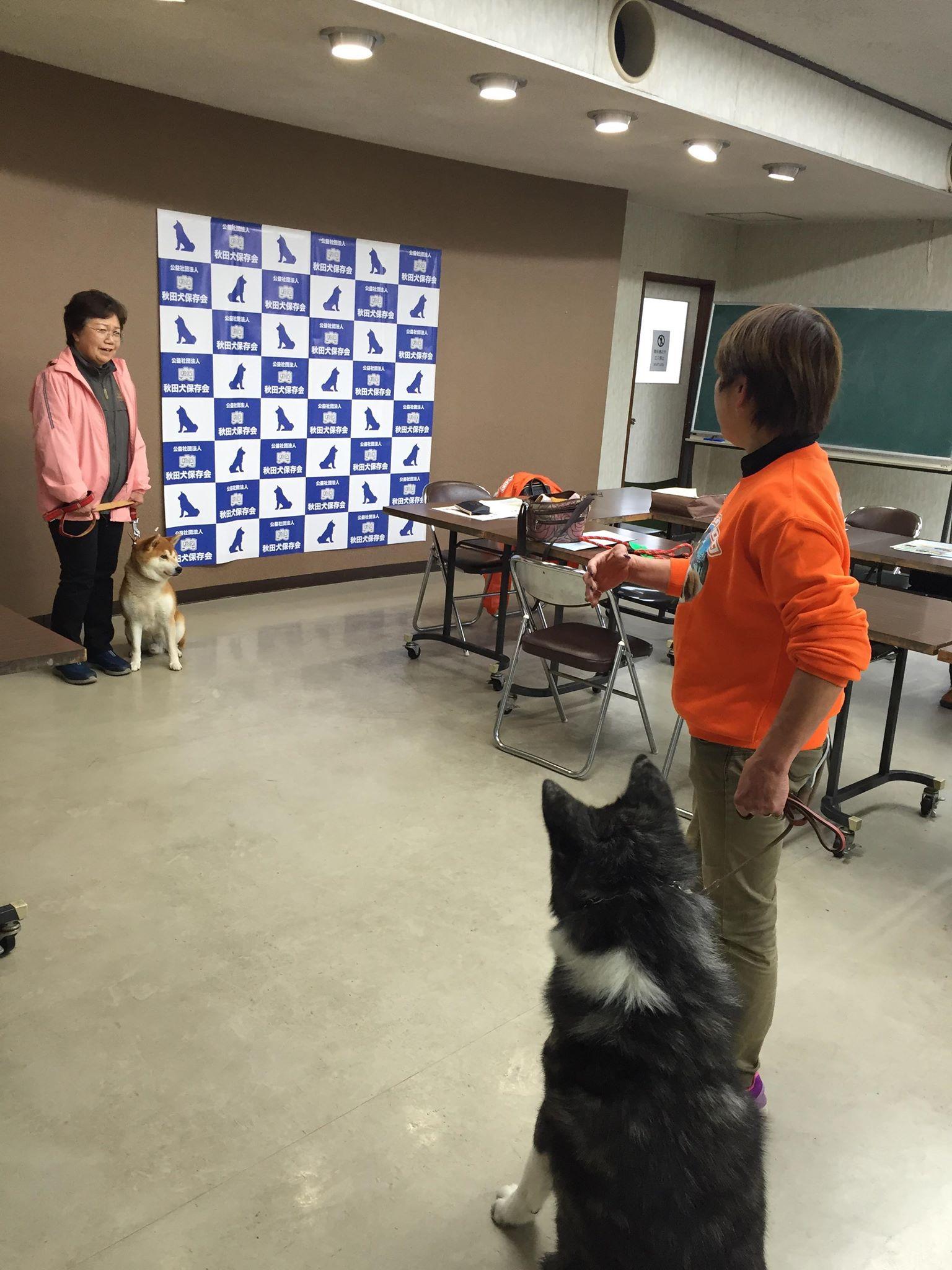 秋田犬の普及活動に取り組む理由