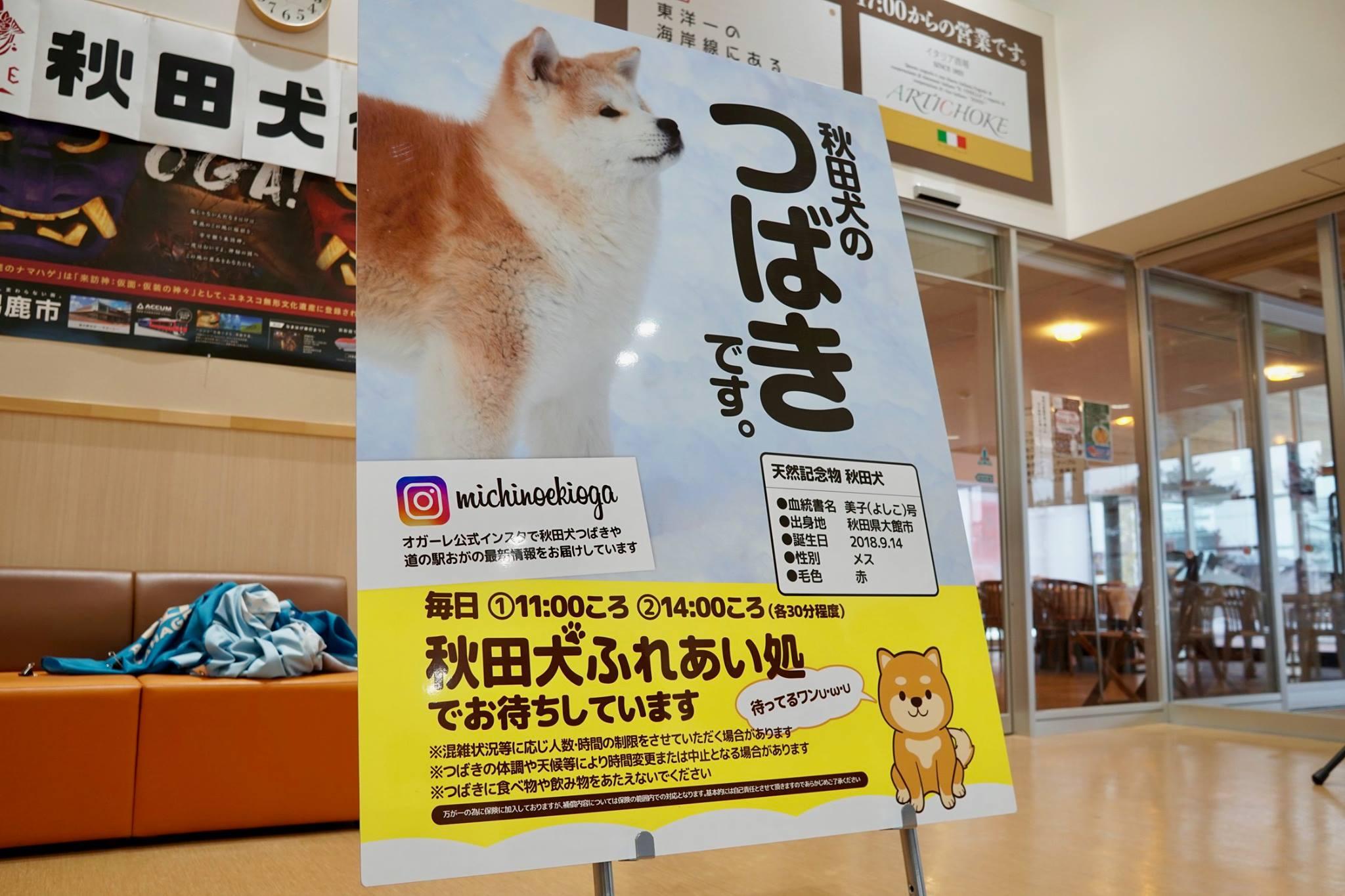 秋田犬に会いに行く◆道の駅おが|なまはげの里オガーレ