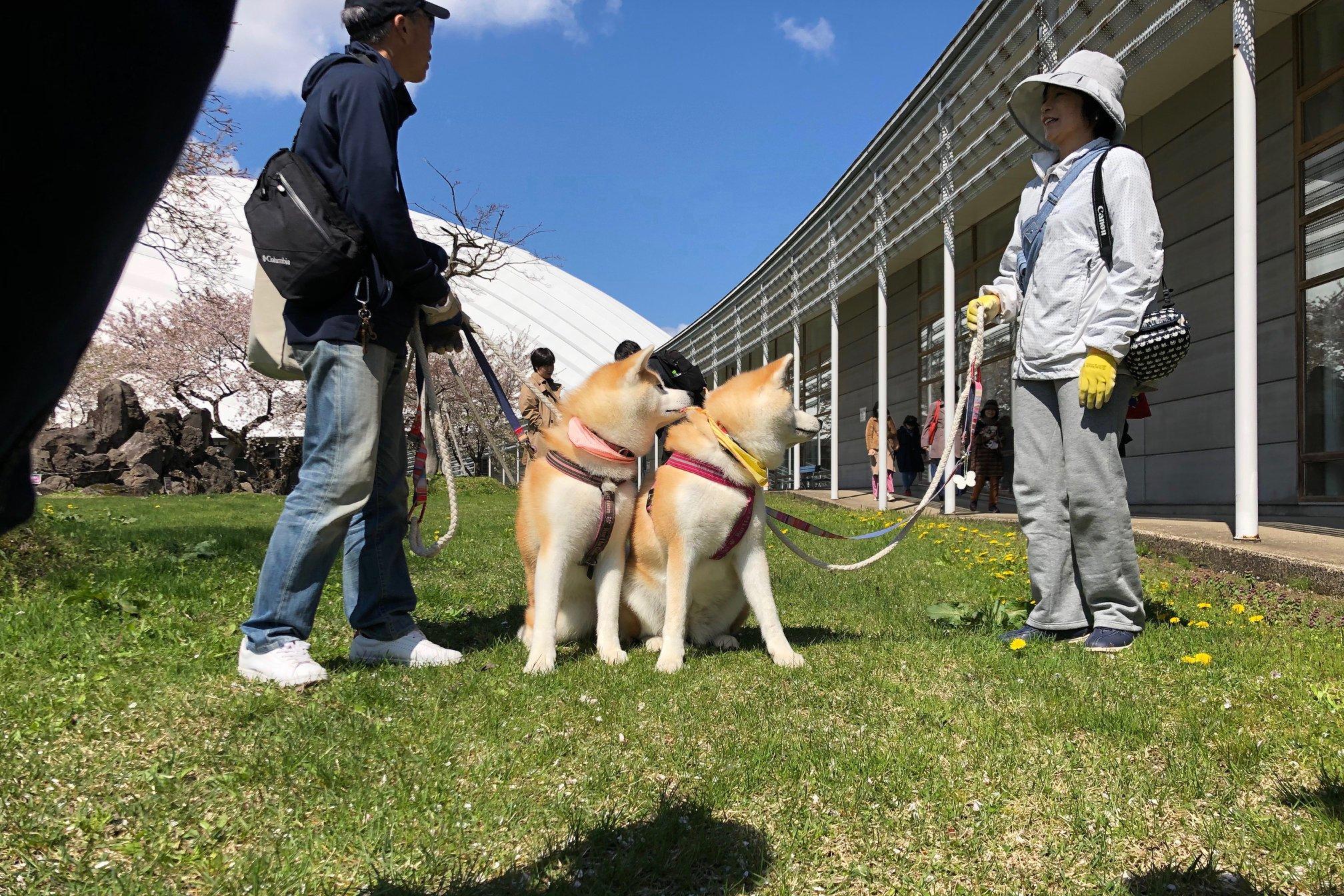 秋田犬に会いに行く◆第140回 秋田犬保存会本部展覧会