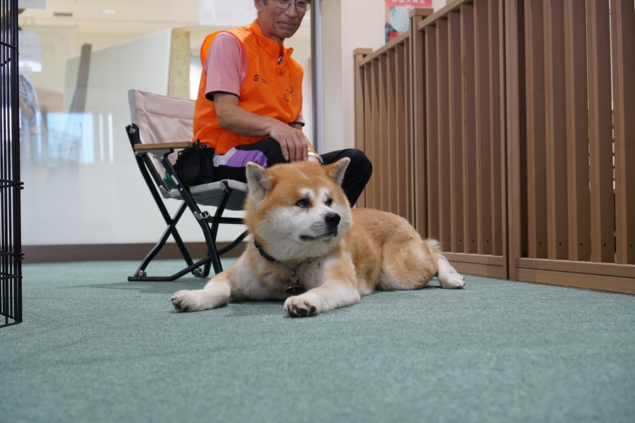 秋田犬に会いに行く◆大館市観光交流施設|秋田犬の里