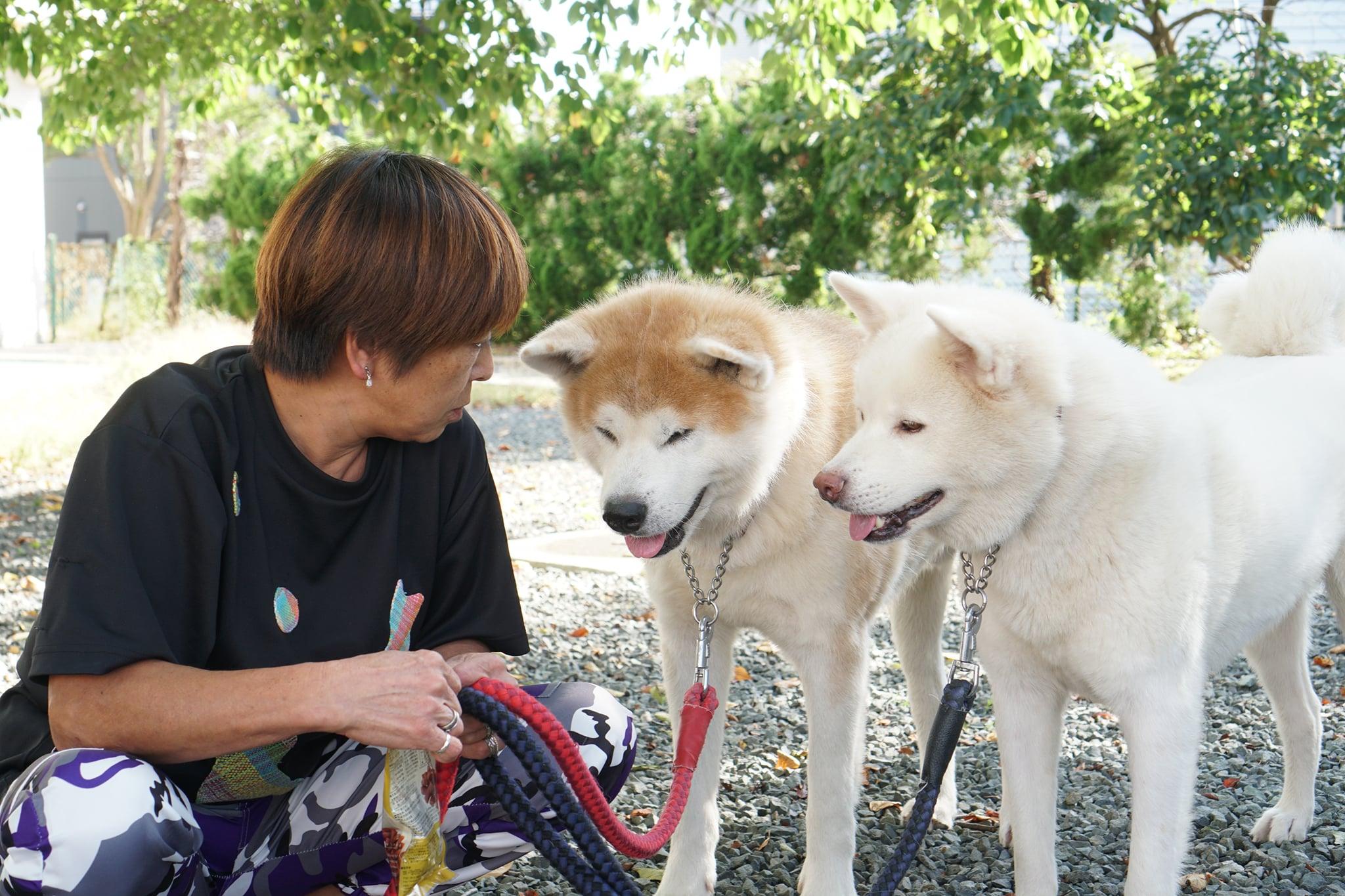 2頭の秋田犬を新たに引き取りました。