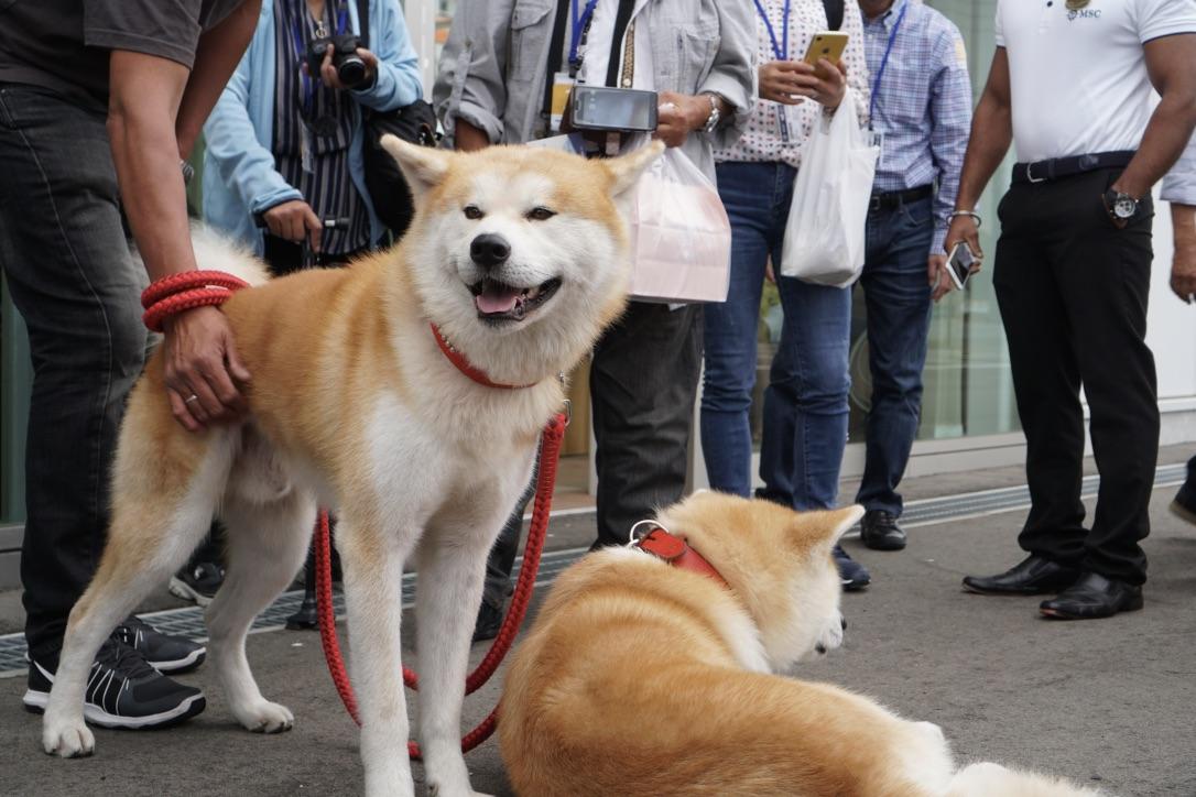 秋田犬に会いに行く◆思いがけず人気者と遭遇!