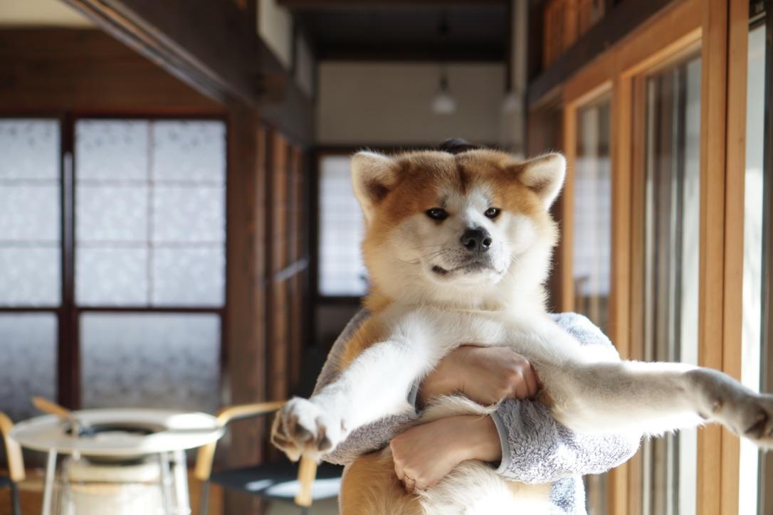 秋田犬に会いに行く◆角館 民泊「縁 Enishi」