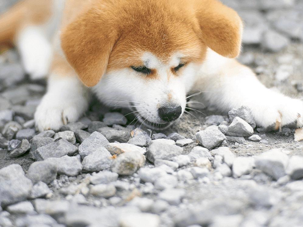 シリーズ「私と秋田犬」vol.1
